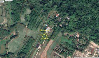 PH591 ขายที่ดินมีสวน 200 ตร.ว.