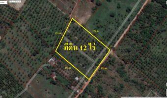 PH912 ด่วนขายที่ดินสวย เป็นสวนมะพร้าวจำนวน 12 ไร่ เป็นรูปสี่เหลี่ยม พื้นที่สีชมพู
