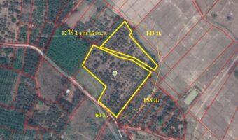 PH758 ที่ดิน 12 ไร่ 2 งาน 16 ตร.ว. พร้อมสิ่งปลูกสร้าง และสวนผลไม้ มีสระน้ำและไฟฟ้า