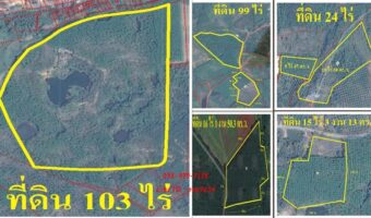 PH929 ขายที่ดินจันทบุรี มีสวนทุเรียน สวนยาง สวนมังคุด และสวนลองกอง สวนยาง พร้อมบ้าน เนื้อที่ 259 ไร่