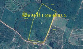 P123 ขายที่ดินสวนยาง 54 ไร่ 1 งาน 40 ตารางวา ตำบล สะตอ. จังหวัดตราด ปลูกยางพาราเต็มพื้นที่ มีท่อน้ำดิบผ่านหน้าสวน